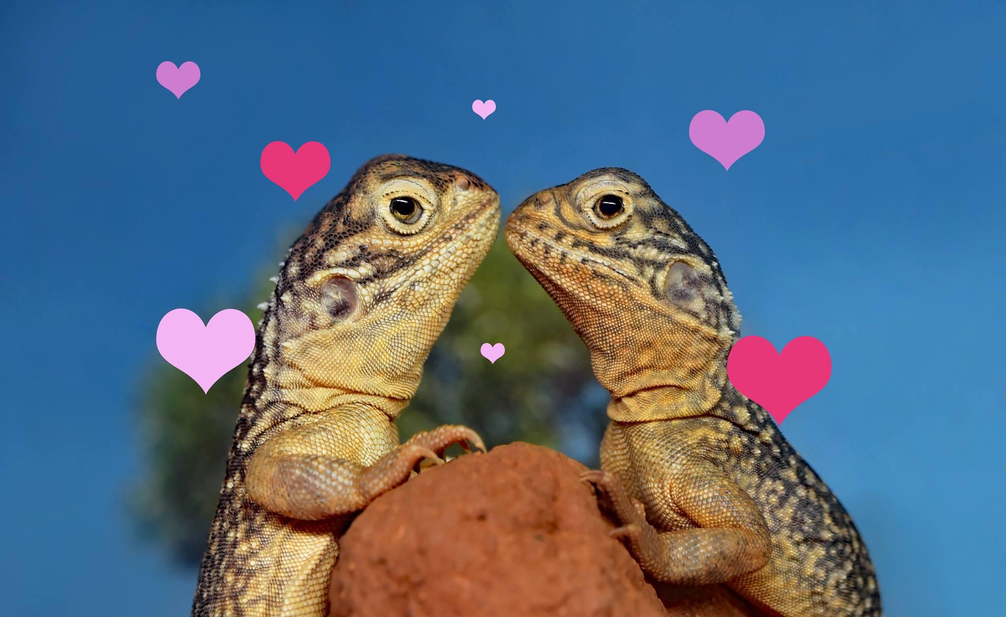 Speed Dating Gecko bar